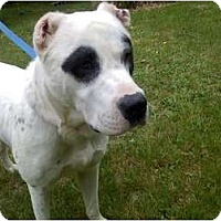 Adopt A Pet :: Jimmy - Raymond, NH