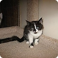 Adopt A Pet :: Oscar - Phoenix, AZ