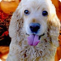 Adopt A Pet :: Peanut pending adoption - Sacramento, CA