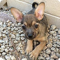 Adopt A Pet :: Reagan - Phoenix, AZ