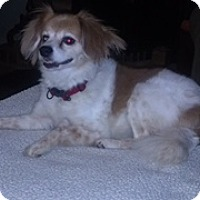Adopt A Pet :: Twinkie  -Courtesy List - Richmond, VA