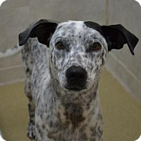 Adopt A Pet :: Jazz - Miami, FL