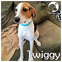 Adopt A Pet :: Twiggy - Pittsburgh, PA