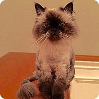 Adopt A Pet :: Elena - Long Beach, NY