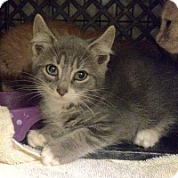Adopt A Pet :: Colin - East Brunswick, NJ