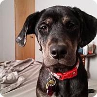 Adopt A Pet :: Wren - Springfield, MO