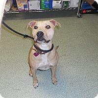 Adopt A Pet :: Dash - Seattle, WA