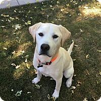 Adopt A Pet :: Hero - Denver, CO