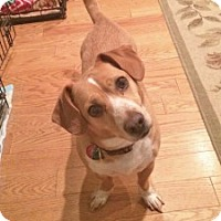 Adopt A Pet :: Mac - Chalfont, PA