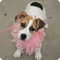 Adopt A Pet :: Bridgette - Muldrow, OK