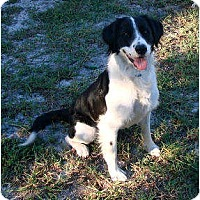 Adopt A Pet :: Seek - Nokomis, FL