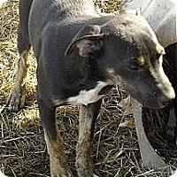 Adopt A Pet :: Eddie - Moulton, AL