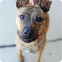 Adopt A Pet :: Tigo - Reisterstown, MD