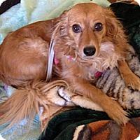 Adopt A Pet :: Lexie - Canoga Park, CA