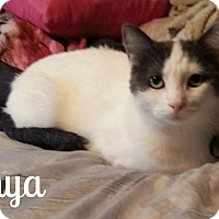 Adopt A Pet :: Sonya - Simi Valley, CA