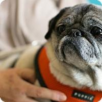 Adopt A Pet :: Molly - Pismo Beach, CA