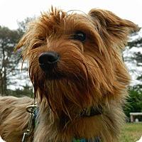 Adopt A Pet :: Jaxson - ROME, NY