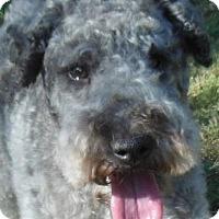 Adopt A Pet :: Legacy - MINNEAPOLIS, KS