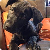 Adopt A Pet :: Luke - Dripping Springs, TX