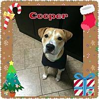 Adopt A Pet :: Cooper - Mt. Clemens, MI