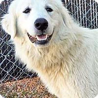 Adopt A Pet :: Robin - Needs Foster! - Beacon, NY