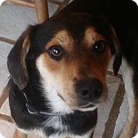 Adopt A Pet :: ANDY - Cranford, NJ