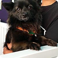 Adopt A Pet :: Rocky - Thousand Oaks, CA