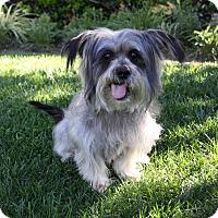 Adopt A Pet :: LORENZO - Newport Beach, CA