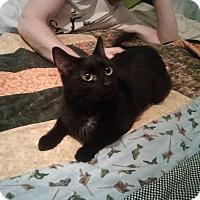 Adopt A Pet :: Ti-Lilly - Toronto, ON