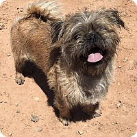 Adopt A Pet :: OLLIE - Hurricane, UT