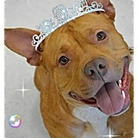 Adopt A Pet :: Princess - Toledo, OH