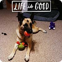 Adopt A Pet :: Dallas(CL) - Greensboro, NC