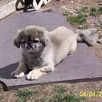 Adopt A Pet :: Carson - Broken Bow, NE