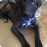 Adopt A Pet :: JASPER - Lawton, OK
