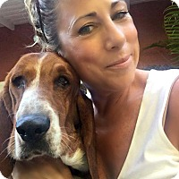 Basset Hound Dog for adoption in Beverly Hills, California - Barney