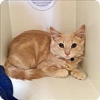 Adopt A Pet :: Ginny - Riverside, CA