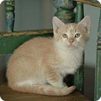 Adopt A Pet :: bruce - San Antonio, TX