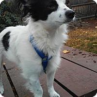 Adopt A Pet :: Marco in RI - Providence, RI