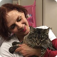 Adopt A Pet :: Willow - Manchester, CT