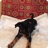 Adopt A Pet :: Chloe - Powder Springs, GA