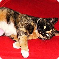 Adopt A Pet :: Marcie - Summerville, SC