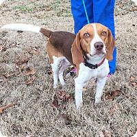 Adopt A Pet :: Hess - Windham, NH