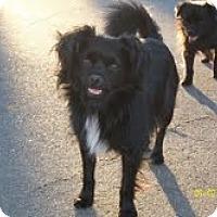 Adopt A Pet :: Dale - Irvine, CA