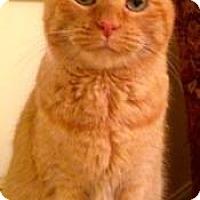 Adopt A Pet :: Muffett - Palatine, IL