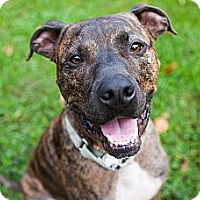 Adopt A Pet :: Chico - Reisterstown, MD