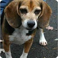 Adopt A Pet :: Sheila - Portland, OR