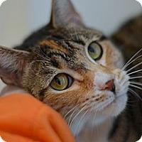 Adopt A Pet :: Peppa - Brooklyn, NY