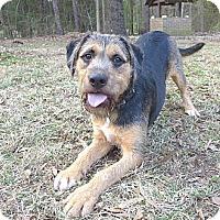 Adopt A Pet :: Marley - Mocksville, NC