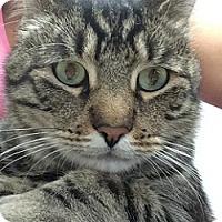 Adopt A Pet :: Benji - Hamburg, NY