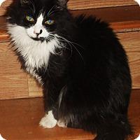 Adopt A Pet :: Serena - Mississauga, Ontario, ON